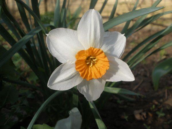 У кого-небудь є квітка пасифлора? Довго шукаю немогу ніде знайти