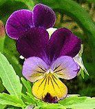 гороскоп квітів в квітні