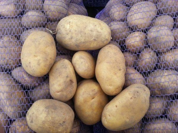 Фото картоплі сорту Уладар