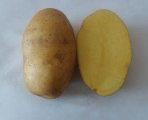 Вирощування і догляд за картоплею сорту Уладар