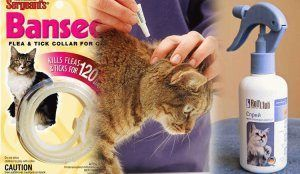 Блішки у кішки? Не проблема! Кошти від бліх для котів: чим вивести в домашніх умовах