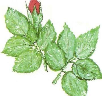 Хвороби і шкідники кімнатних рослин, заходи профілактики та боротьби з хворобами кімнатних рослин