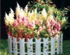 Бордюр садовий з рослин