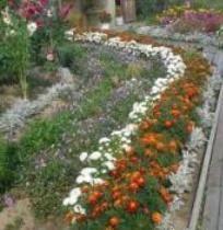 Бордюр з квітів на дачі
