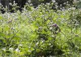 Натуральні маски і трави для відновлення сухого волосся