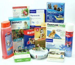 Чим же їх прогнати? Засоби від бліх для собак: чим обробити, кращі спреї, ошийники і шампуні