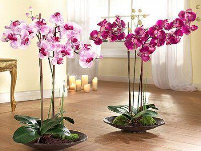 Що робити далі - орхідея відцвіла: догляд і як обрізати після цвітіння в домашніх умовах