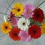5 правил, щоб квіти довго стояли