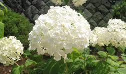 гороскоп квітів на квітень