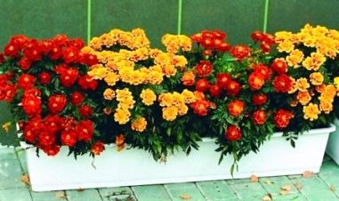 Квіти в горщиках і контейнерах для декору на дачі