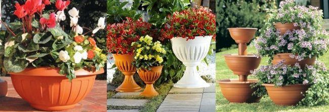 Квіти в горщиках назви і фото
