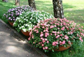 Квіти в горщиках назви