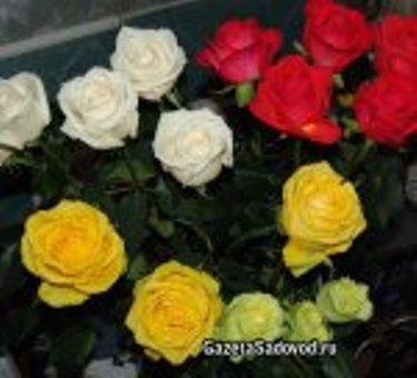 Квіти в зрізку, як продовжити їхнє життя