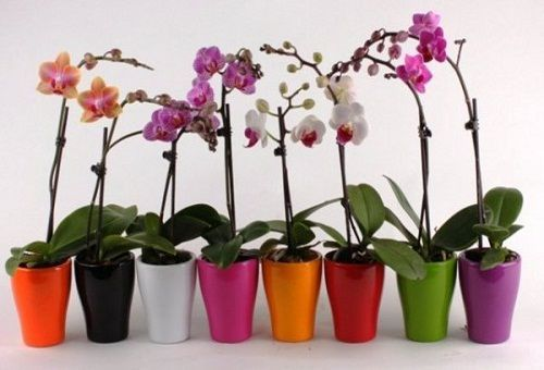 Дієві добрива для орхідей