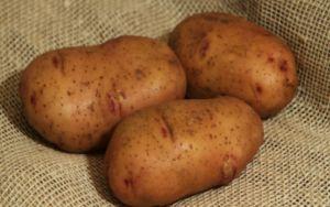 Двухурожайний картопля «тірас»: опис сорту, фото, тактика догляду