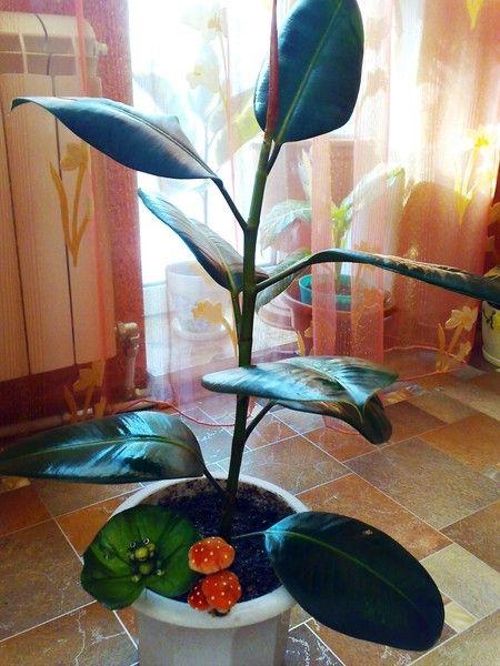 Можна вирощувати вуличну хризантему в будинку? Поділіться досвідом!