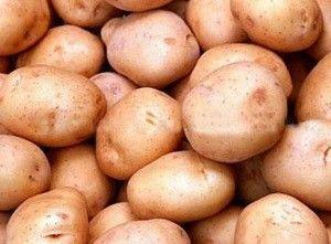 Сорт картоплі Тімо: опис