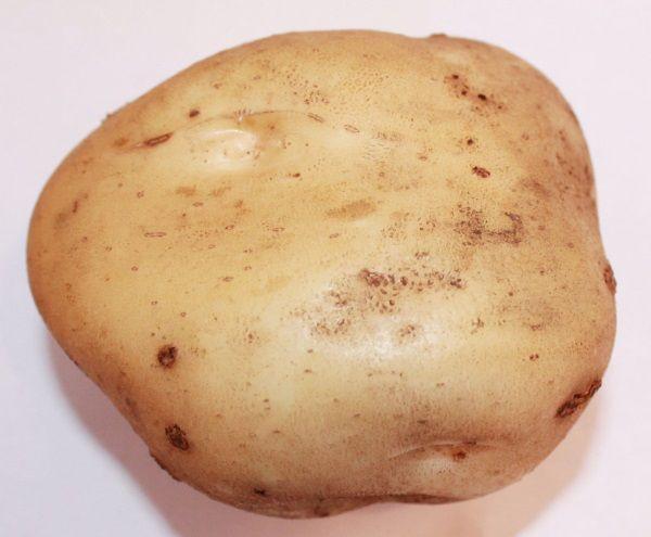 Фото картоплі сорту Тімо