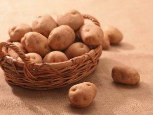 Картопля Тімо: розпушування та підгортання