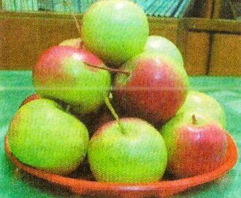 Фітомаг, використання хімічних засобів для продовження термінів зберігання фруктів
