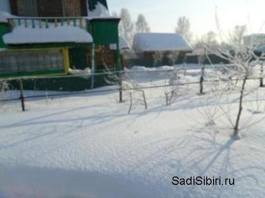 Фотографії з саду: кліматичні умови 2013 року на півдні кузбасу
