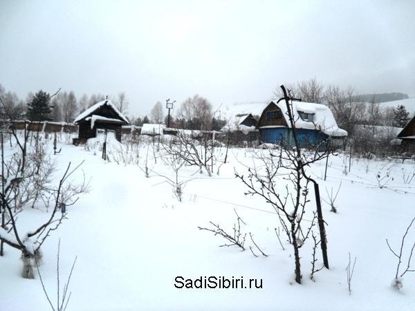 Фотографії сезон 2015 року через саду казанина геннадий петрович