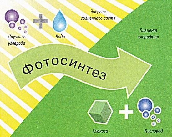 Фотосинтез, або листове харчування рослин по трактуванні природного землеробства