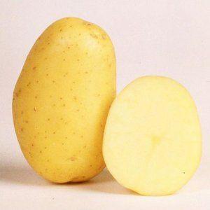 Німецький сорт картоплі зекура для центральної росії
