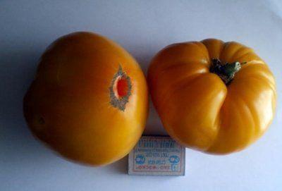 tomat_korol_sibiri