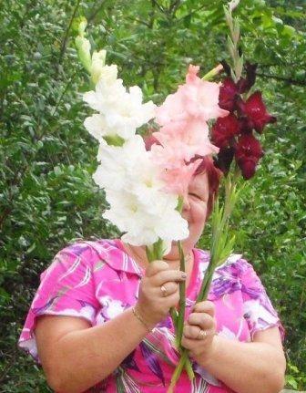 Гладіолус, історія культури, сортамент, особливості догляду за квітами