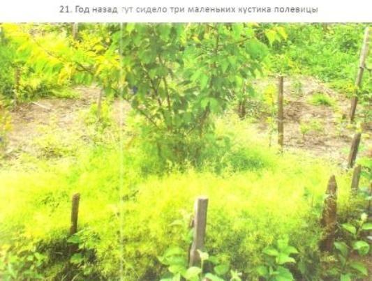Глава третя з книги розумний сад. Як перехитрити клімат: що значить хороше місце для саду