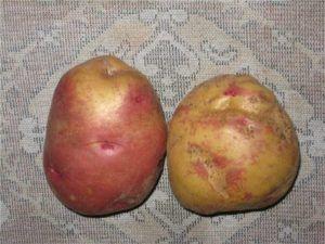 Голландський картопля: «іван та мар`я» опис сорту, характеристики, фото
