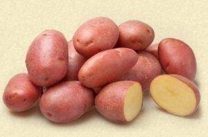 Голландський картопля «кураж»: опис сорту, характеристика і фото