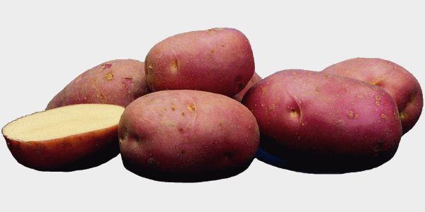 Голландський картопля сорту скарлет: чудовий смак і тривале зберігання
