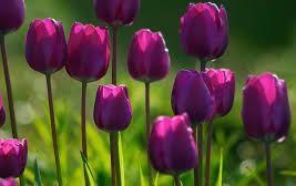 гороскоп квітів в червні