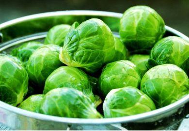 Готуємо майбутній урожай: брюссельська капуста - вирощування і догляд