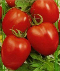 Характеристика, опис, гідності сорти томата «паленка f1»