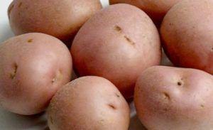 Характеристика насіннєвої картоплі «романо», опис сорту і фото