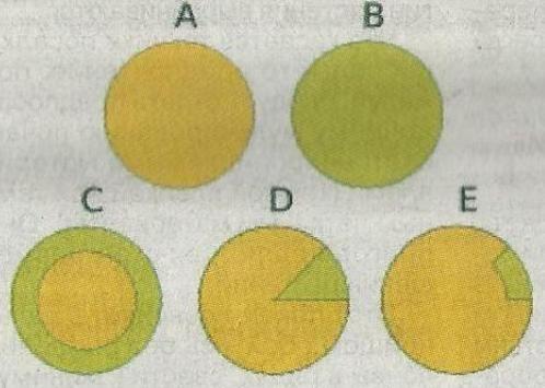 Химери - рослини з генетично різними клітинами, групами клітин або тканинами, спостереження в практиці садівництва