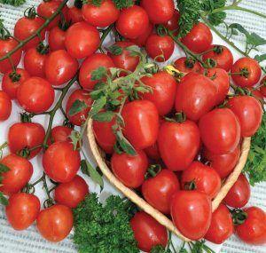 І не ягода зовсім, а помідор! Переваги та недоліки томата сорту «черрі полуничний» f1
