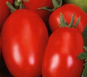 Цікавий і невимогливий томат «волові вуха»: опис сорту і фото