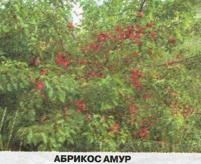 Підсумки сезону 2013 року в саду евгенія івановича піскунова з хакасії
