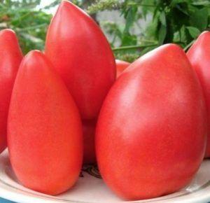 Витончений і смачний томат «супермодель»: опис сорту, фото