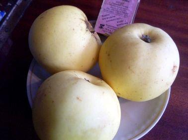 Яблуні: самосівні сорти або сорти народної селекції, що знаходяться в селі алтайському під наглядом антона макунаса