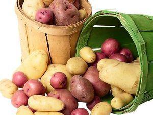 Ефективні добрива для картоплі при посадці