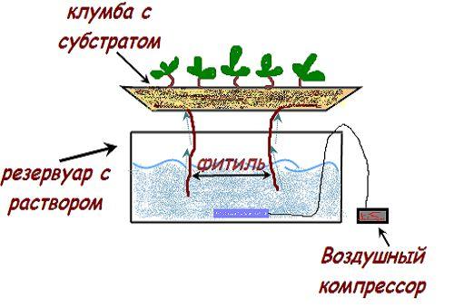 Як робиться гідропоніка для огірків своїми руками
