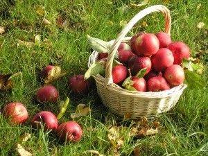Зберігання яблук будинку