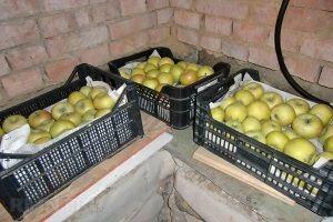 Зберігання яблук на балконі