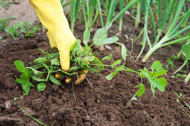 Як боротися з бур`янами на городі