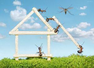 Як позбутися від домашніх мурашок